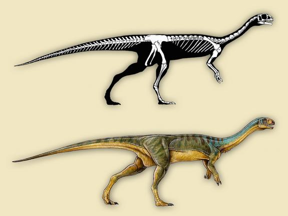 Chilesaurus diegosuarezi X-ray view