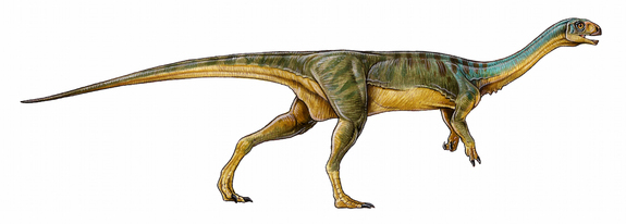 Chilesaurus diegosuarezi drawing