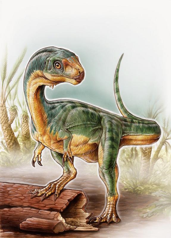 Chilesaurus diegosuarezi Image