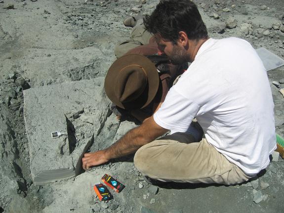 Chilesaurus diegosuarezi excavation