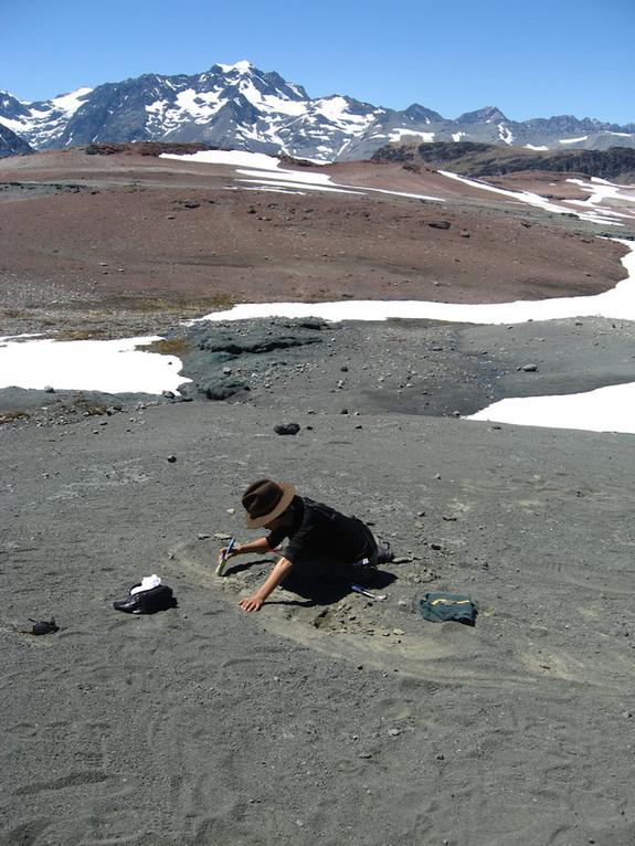 Chilesaurus diegosuarezi mine 2